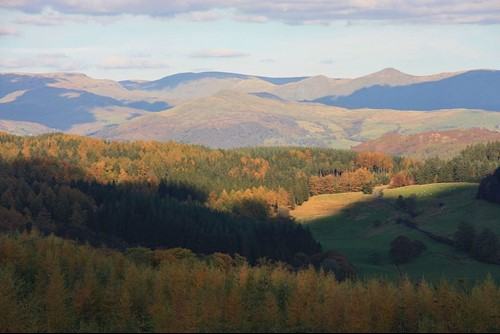 Grizedale camping
