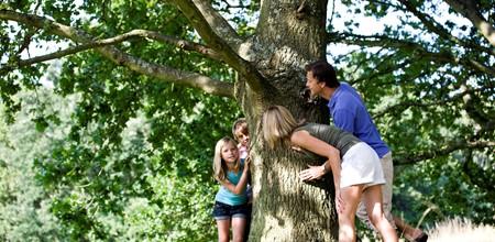 Hiding around tree image