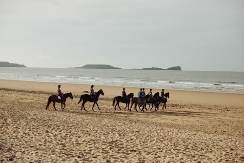 Horses in Wales