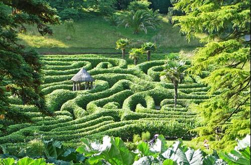 The maze at Glendrugan, Cornwall