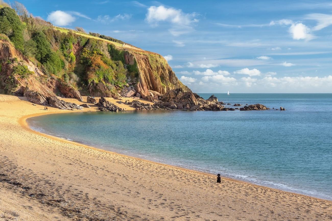 Devon Beach Dog