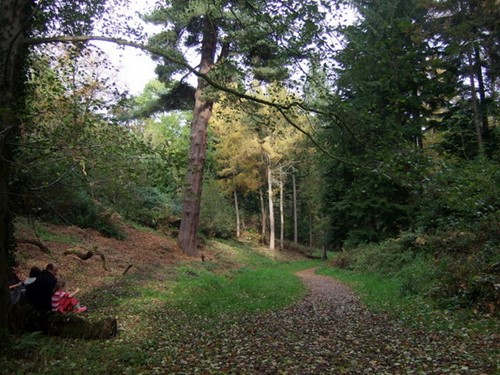 Leigh woods camping